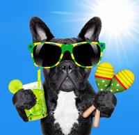 Cool dog in the hot sunshine